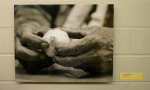 Daddy's Hands - photograph by Nan Madruga